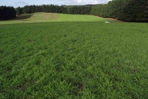 atom_prairie_grass_image