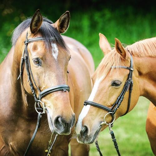 horses_equi1st_mix
